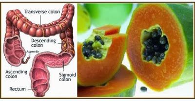 c0428-intestino_papaya